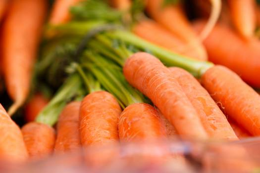 Carrot Food Root Free Photo