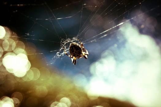 Spider web Spider Web #15207