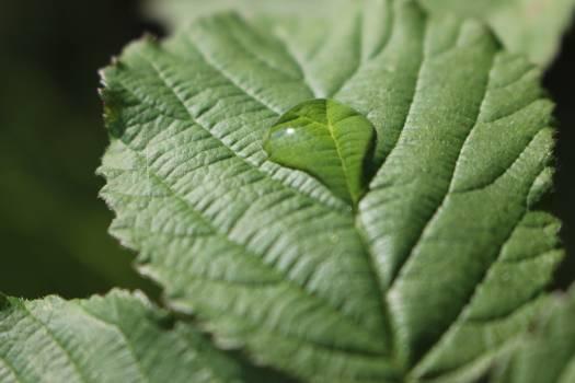 Plant Leaf Fern Free Photo