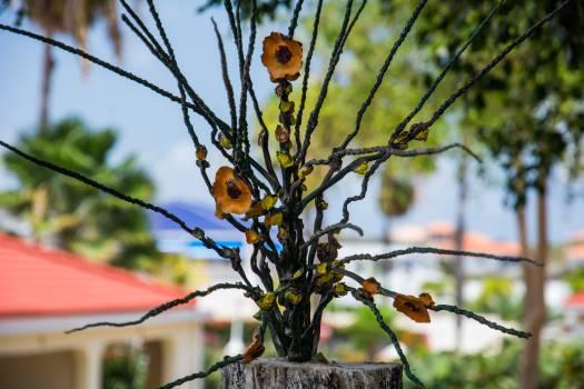 Finch Plant Goldfinch #15265