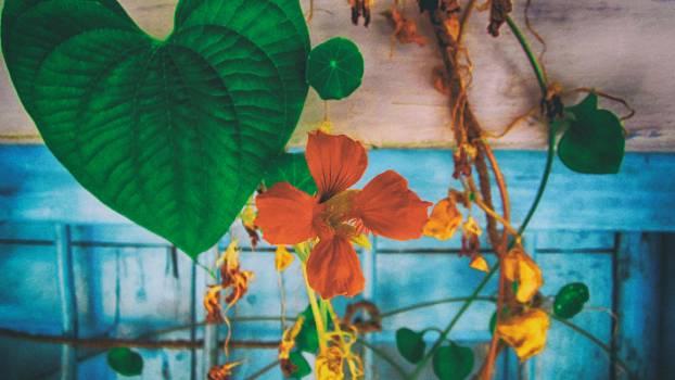 Painter Artwork Color Free Photo