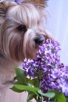 Terrier Hunting dog Dog #153803