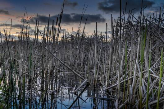 Grass Field Sky #15395