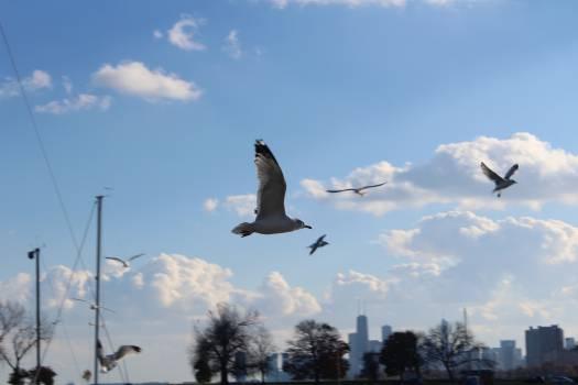 Bird Flying Sky Free Photo