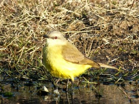 Warbler Bird Beak #154284