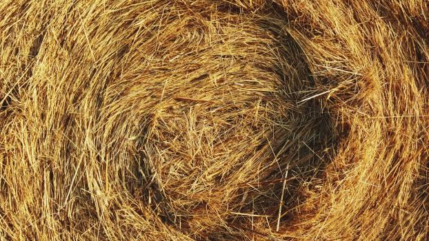 Hay Fodder Feed Free Photo