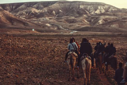 Landscape Steppe Camel Free Photo
