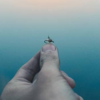 Hand Tick Arthropod Free Photo