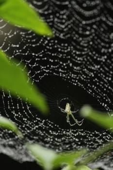 Spider web Web Trap #155603