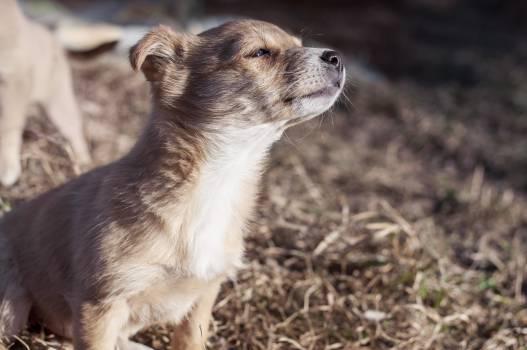 Musteline mammal Weasel Mammal #15651