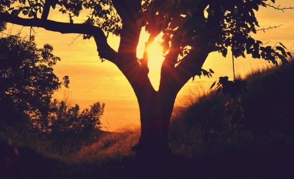 Sun Sunset Sunrise #15658