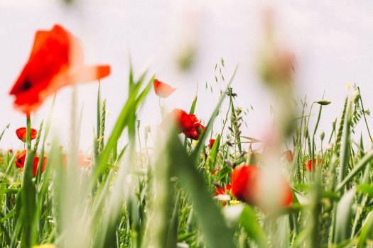 Plant Flower Spring #15664