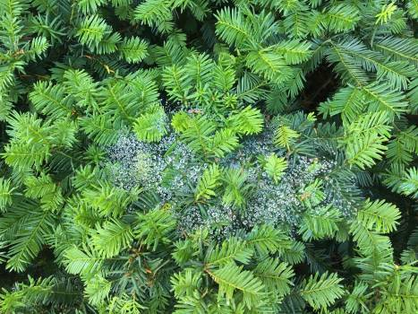 Fern Plant Fir Free Photo