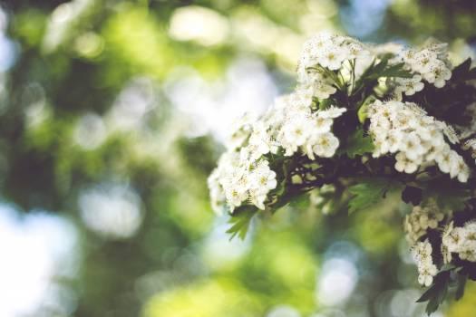 Flower Lilac Floral #15704
