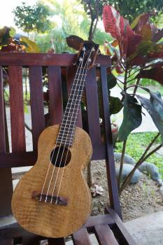 Guitar Stringed instrument Musical instrument #157066
