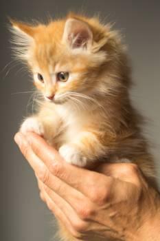 Kitten Cat Feline #15751