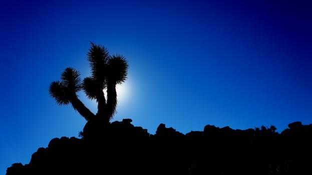 Yucca Shrub Woody plant Free Photo
