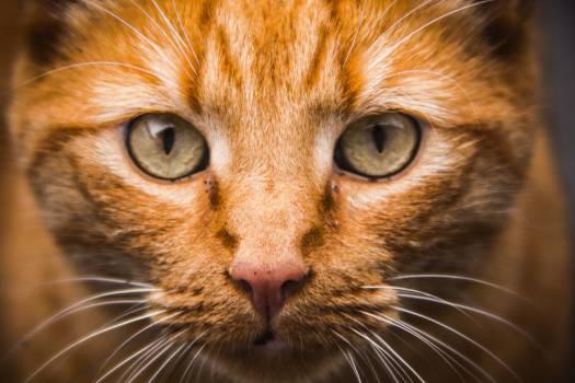 Feline Cat Animal #15788