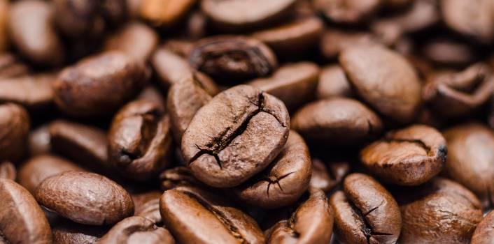 Seed Nut Brown #15818