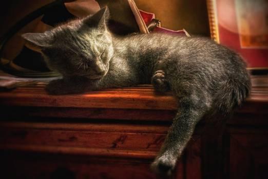 Cat Feline Domestic cat #158250