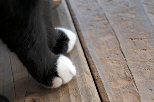 Giant panda Cat Pet #158345