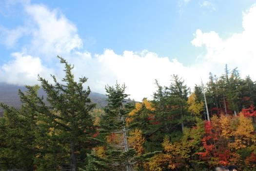 Tree Oak Landscape #158373