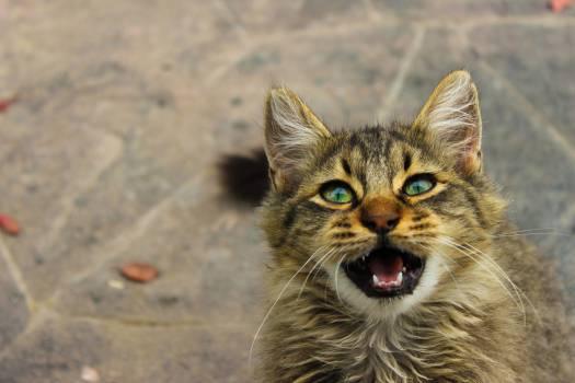 Cat Feline Animal #15878