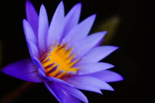 Flower Purple Petal #15901