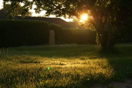 Landscape Grass Field #15910