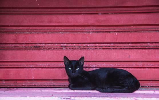 Cat Kitten Windowsill Free Photo