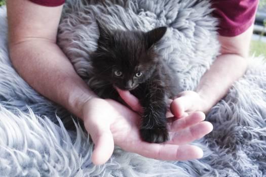 Kitten Young mammal Animal Free Photo