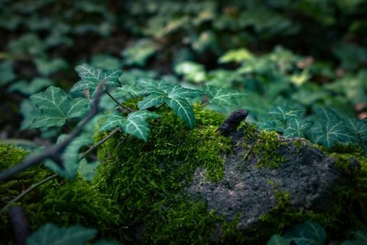 Tree Plant Vascular plant Free Photo
