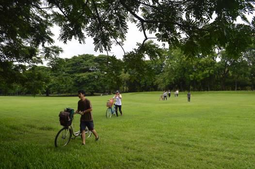 Sport Outdoors Grass Free Photo