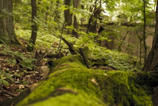 Tree Forest Landscape #159337
