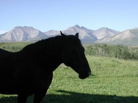 Horse Grass Farm Free Photo
