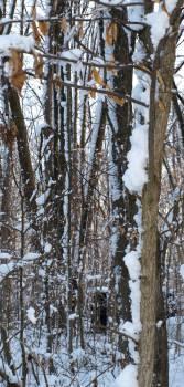 Snow Ice Winter #159742