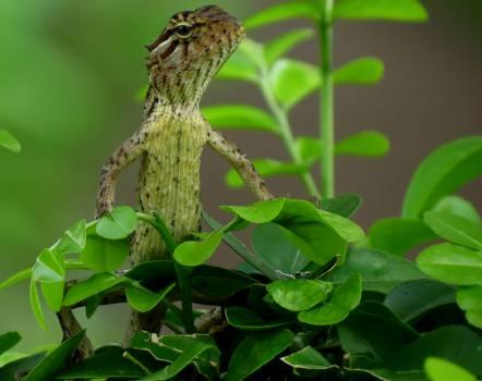 Hummingbird Bird Black #15980
