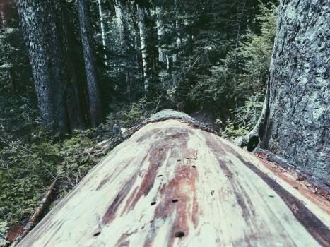 Slope Mountain Landscape Free Photo