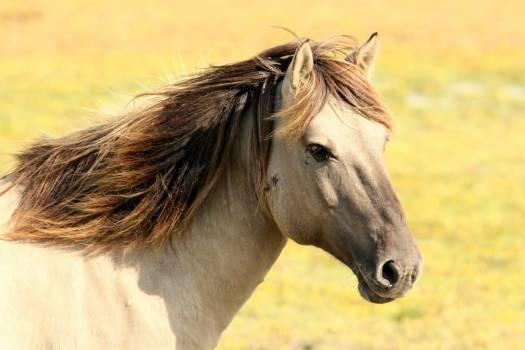 Horse Thoroughbred Animal #16001