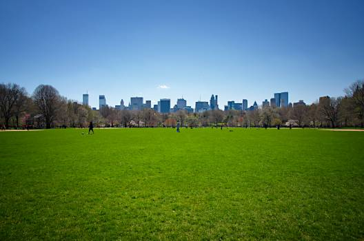 Landscape Grass Field #160181