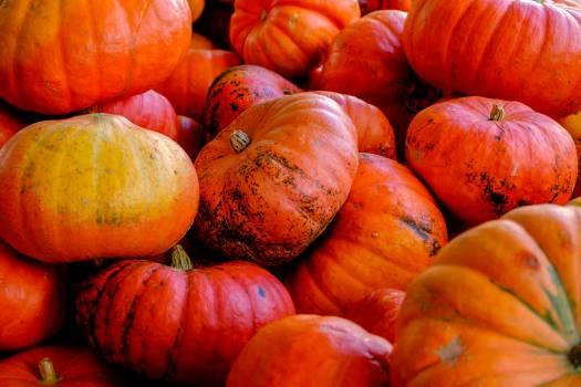 Pumpkin Squash Vegetable #16042