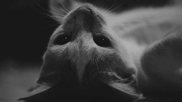 Cat Fur Head Free Photo