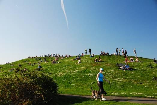 Grass Sky Field #160639