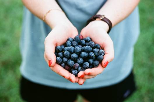 Grape Berry Fruit Free Photo