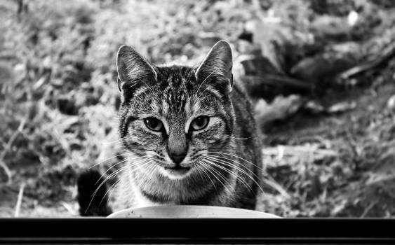 Cat Feline Animal #16104