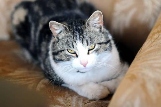 Cat Feline Animal #16130