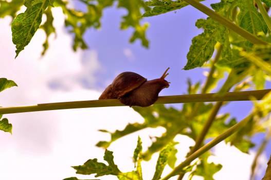 Nightingale Bird Thrush Free Photo