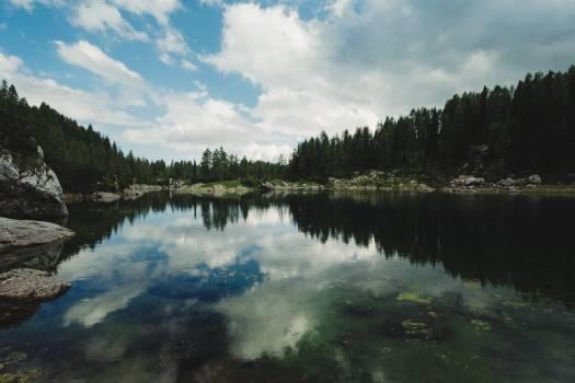 Landscape Water Forest #161407