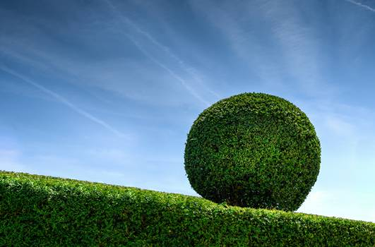 Conservation Environment Grass #16145