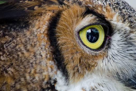 Owl Bird Animal #16163